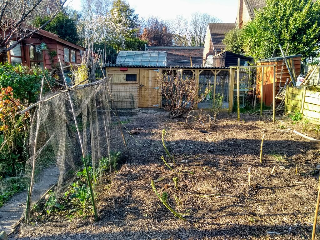 Cleared vegetable patch with chicken house in background